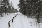 wintershoot